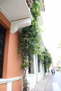 Fachadas coloridas Cidade Murada- Cartagena